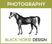 Black Horse Design Photography (South Yorkshire Horse)