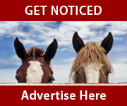 Get Noticed (South Yorkshire Horse)